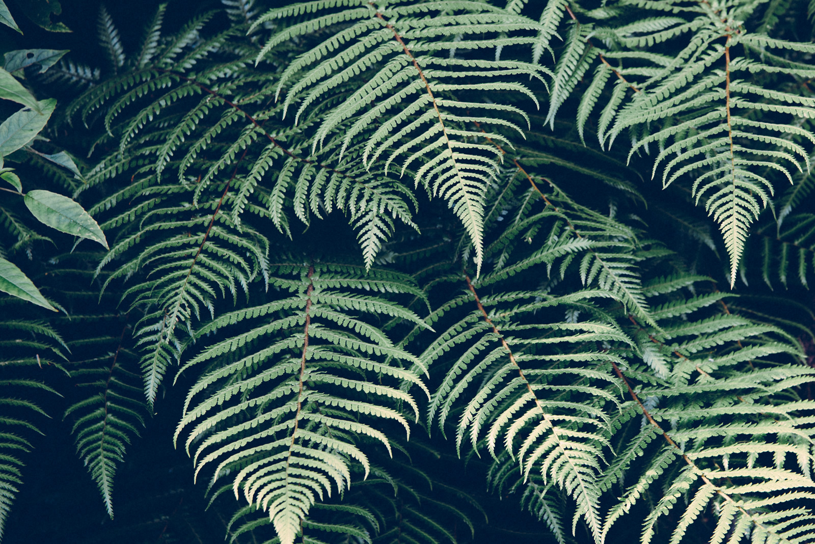 A close-up of green fern leaves